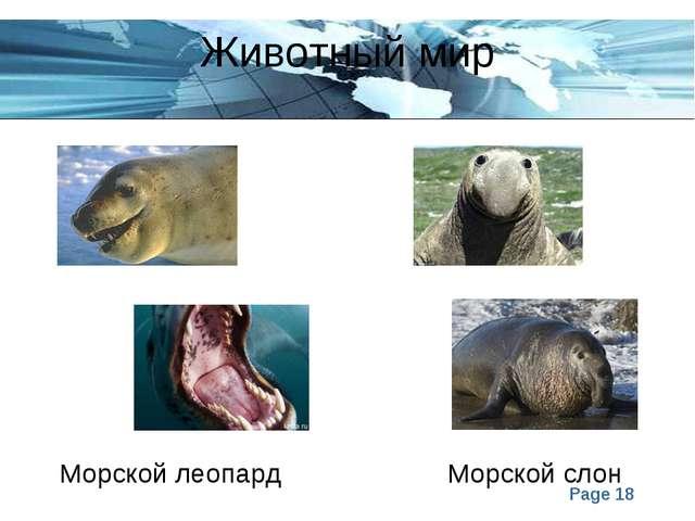 Животный мир Морской леопард Морской слон Page *