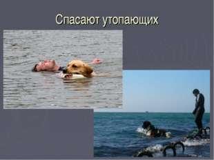 Спасают утопающих