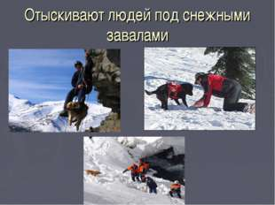 Отыскивают людей под снежными завалами