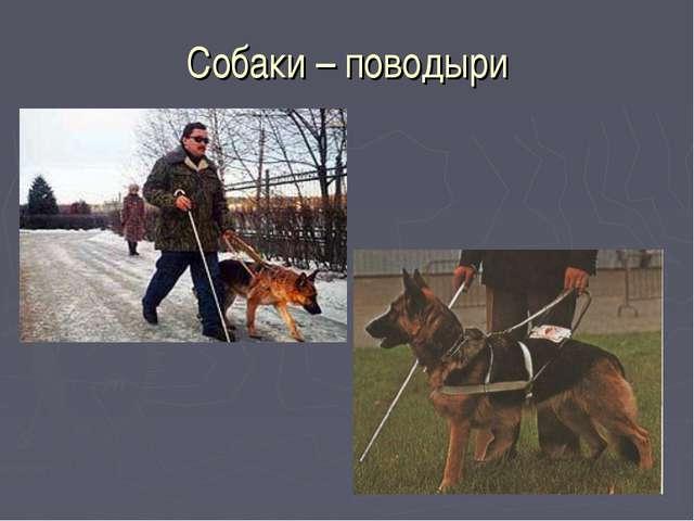 Собаки – поводыри