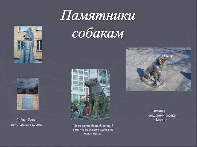 Пёс по кличке Верный, который семь лет ждал своих хозяев на одном месте. памя...