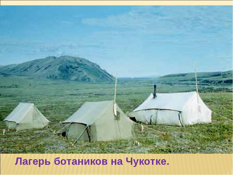 Лагерь ботаников на Чукотке.