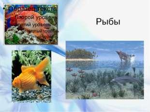 Рыбы Бурякова Ирина Вячеславовна
