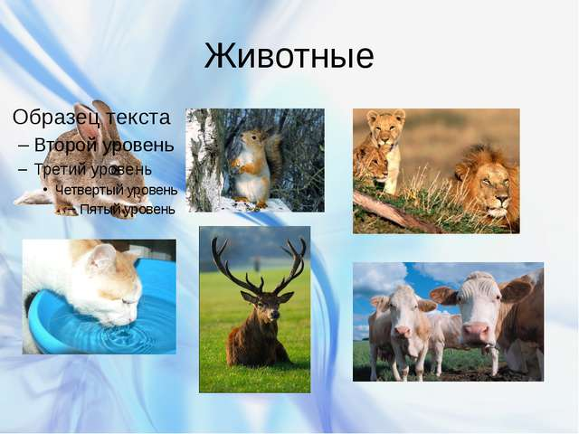 Животные Бурякова Ирина Вячеславовна