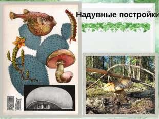 Надувные постройки http://img-fotki.yandex.ru/get/5701/78063559.51/0_966e6_b