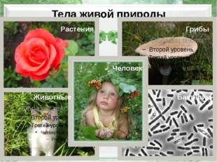 Тела живой природы Растения Грибы Животные Человек Бактерии http://euromednew