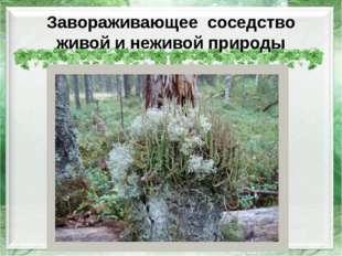Завораживающее соседство живой и неживой природы http://img-fotki.yandex.ru/g
