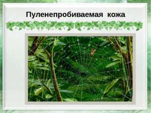 Пуленепробиваемая кожа http://wpapers.ru/wallpapers/Insects/9129/PREV_%D0%9F%