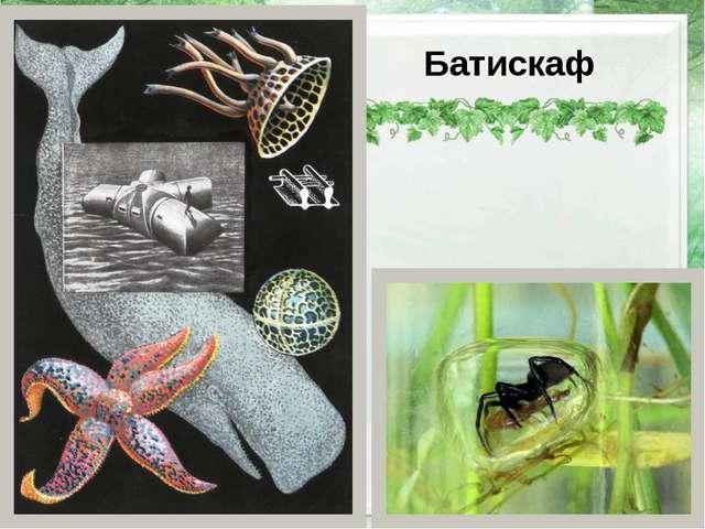 Батискаф http://natureworld.ru/misc/spiders/underwater_sp/underwater_sp_01.j...