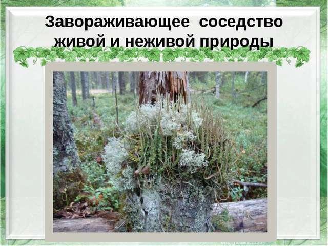 Завораживающее соседство живой и неживой природы http://img-fotki.yandex.ru/g...