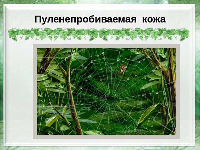 Пуленепробиваемая кожа http://wpapers.ru/wallpapers/Insects/9129/PREV_%D0%9F%...