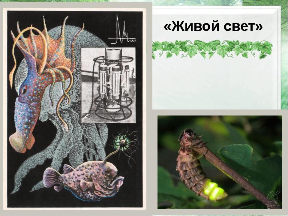 «Живой свет» http://www.floranimal.ru/gallery/big/4122.jpg -светлячок
