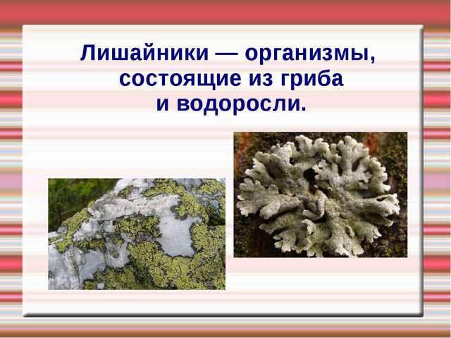 Лишайники — организмы, состоящие из гриба и водоросли.