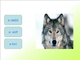 a rabbit a lion a wolf