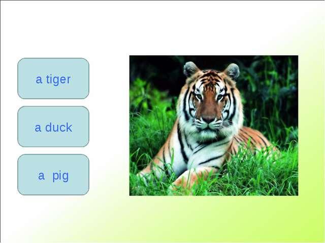 a duck a tiger a pig