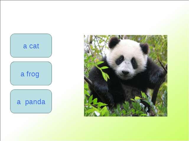 a frog a cat a panda