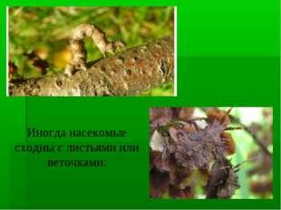 Иногда насекомые сходны с листьями или веточками.
