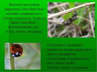 Многие насекомые наделены способностью активно защищаться в случае опасности.