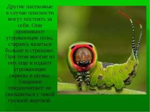 Другие насекомые в случае опасности могут постоять за себя. Они принимают угр