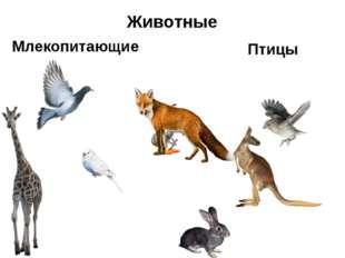Млекопитающие Птицы Животные