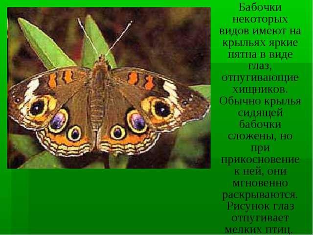 Бабочки некоторых видов имеют на крыльях яркие пятна в виде глаз, отпугивающи...