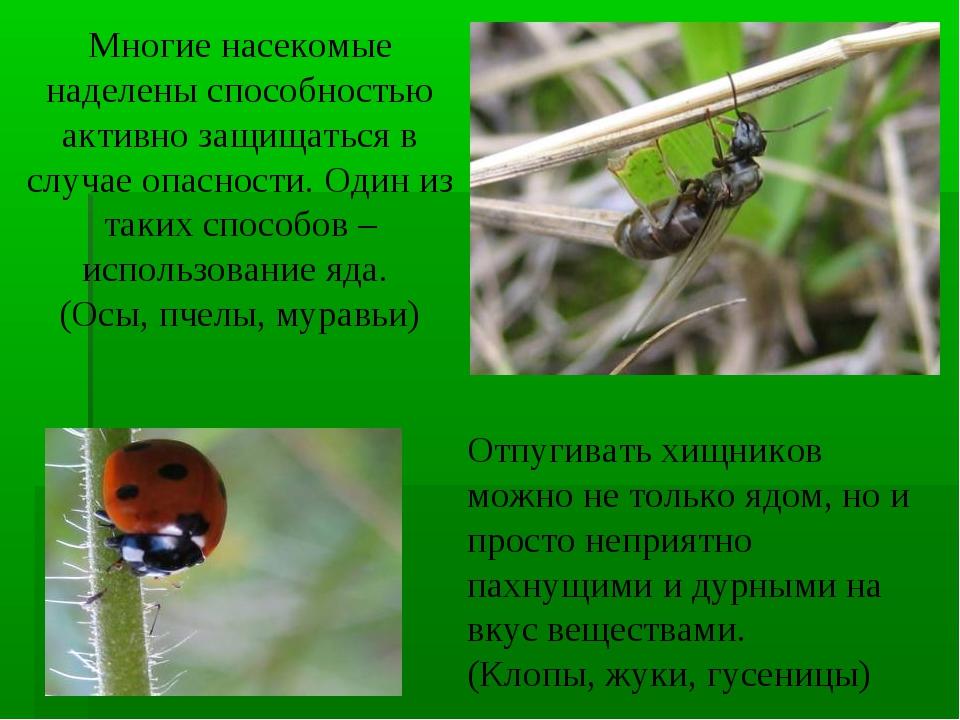 Многие насекомые наделены способностью активно защищаться в случае опасности....