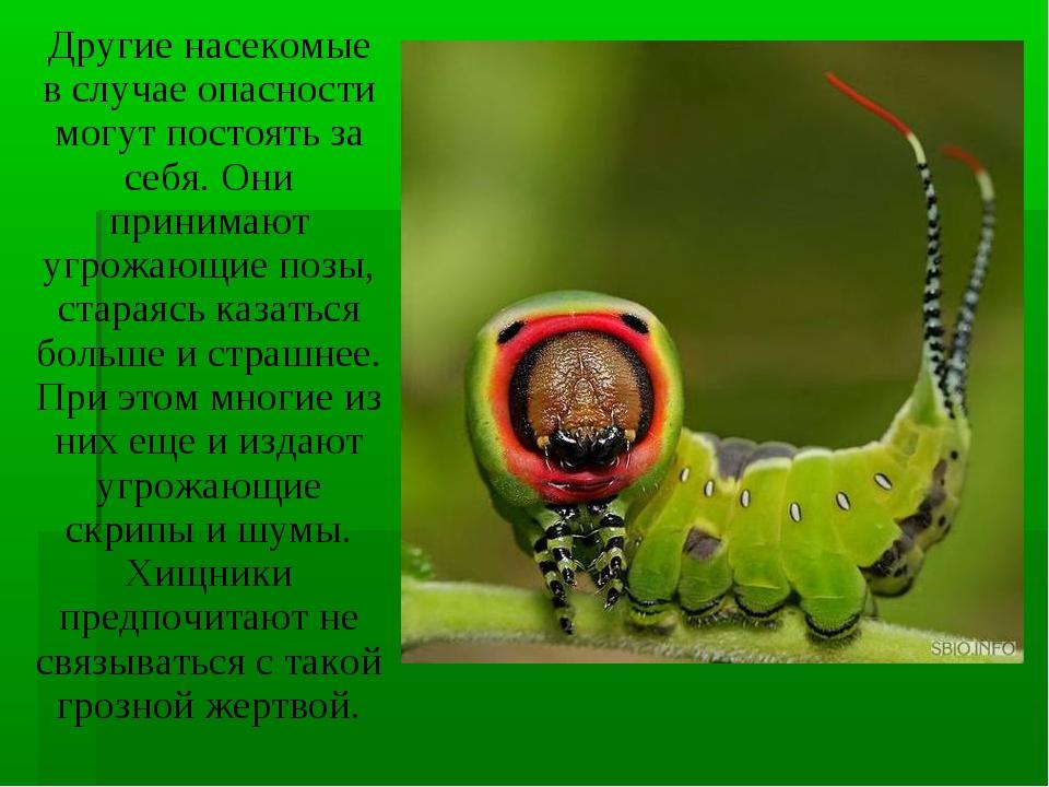 Другие насекомые в случае опасности могут постоять за себя. Они принимают угр...