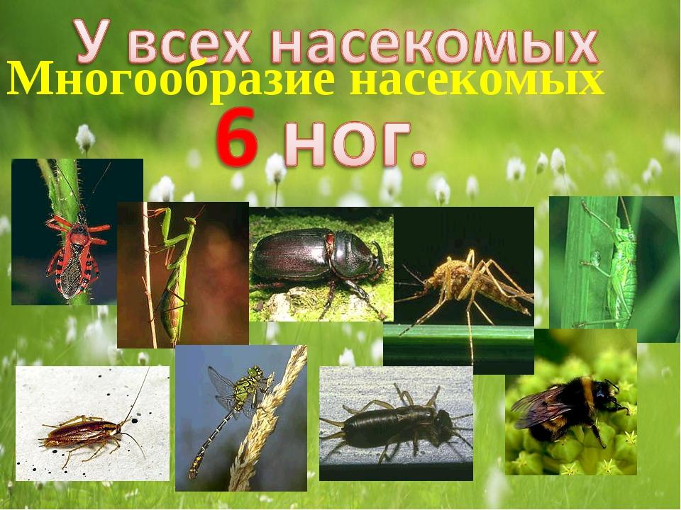 Многообразие насекомых