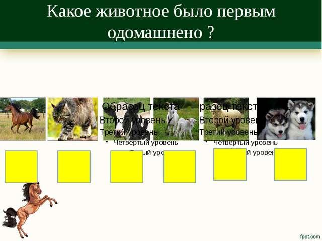 Какое животное было первым одомашнено ?