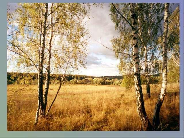 Мое родное Ставрополье – Орлиный солнечный простор. Люблю степей твоих раздол...