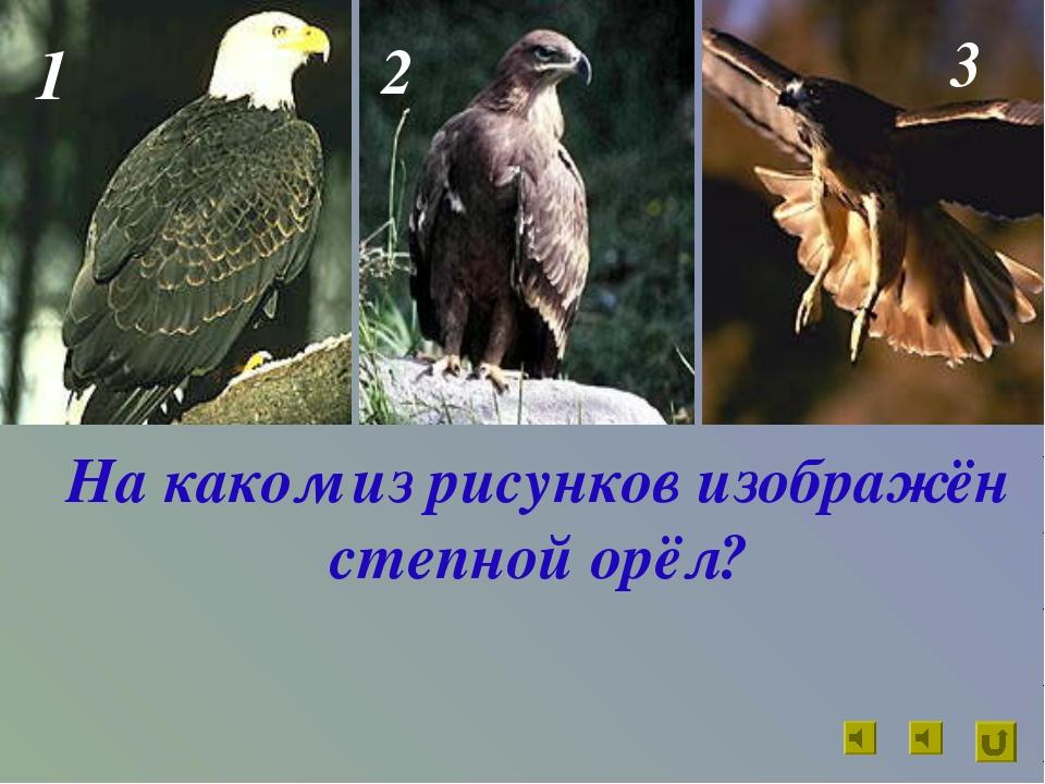 На каком из рисунков изображён степной орёл? 1 2 3