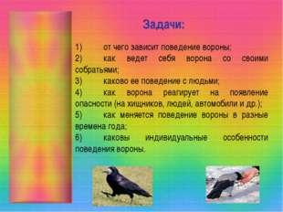 Задачи: 1)от чего зависит поведение вороны; 2)как ведет себя ворона со свои