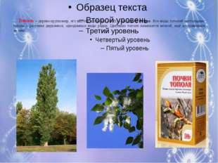 Малы и неказисты И скромно зеленеют, Но осенью их листья И ягоды краснеют. От