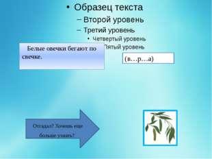 Верба - это ива волчниковая, растёт обычно кустом, вдоль водоёмов. В нашей е