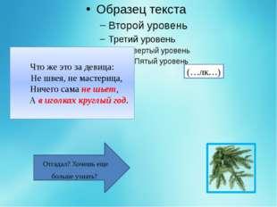 Ель— изящное, стройное вечнозеленое дерево высотой до 30—50 м семейства сос