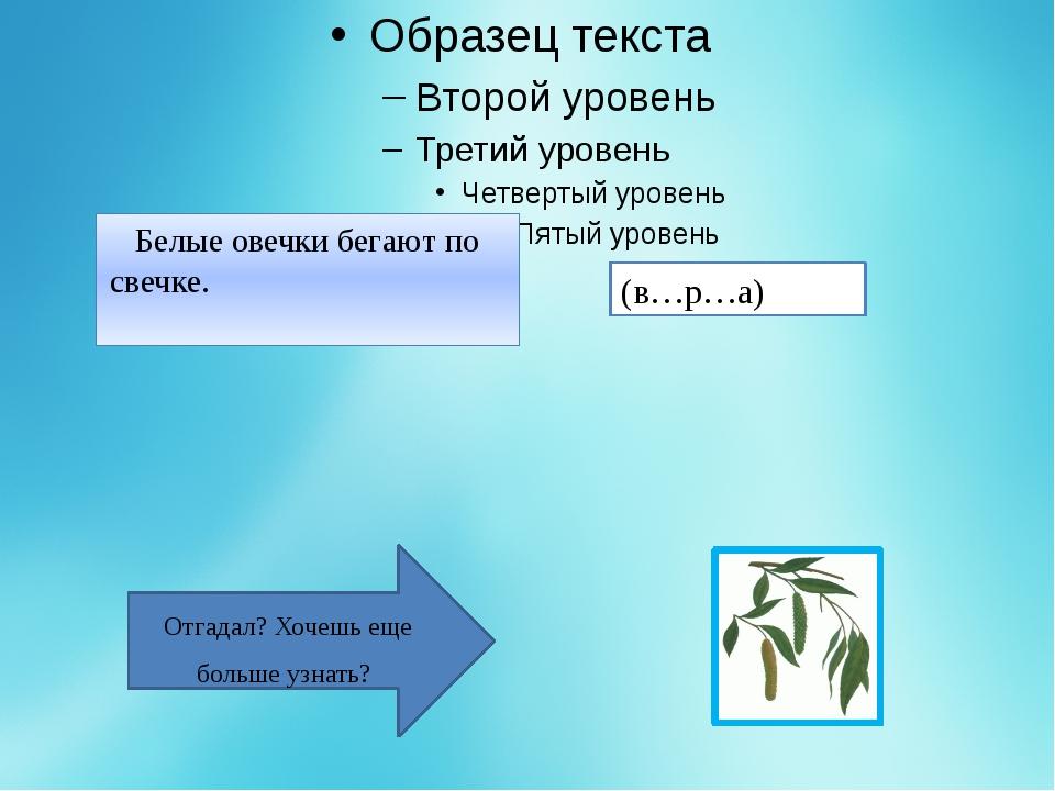 Верба - это ива волчниковая, растёт обычно кустом, вдоль водоёмов. В нашей е...