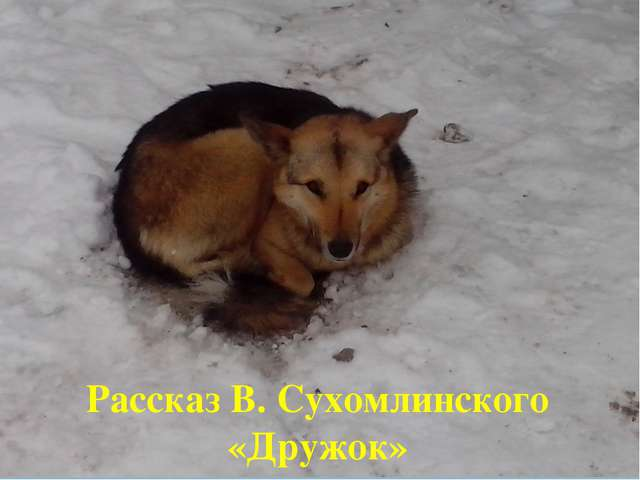 Рассказ В. Сухомлинского «Дружок»