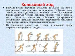 Коньковый ход Вначале нужно научиться скользить на лыжах без палок, поперемен