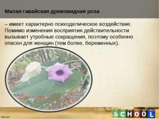 Малая гавайская древовидная роза – имеет характерно психоделическое воздейств