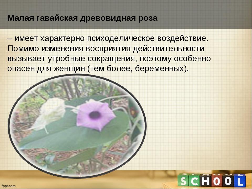Малая гавайская древовидная роза – имеет характерно психоделическое воздейств...