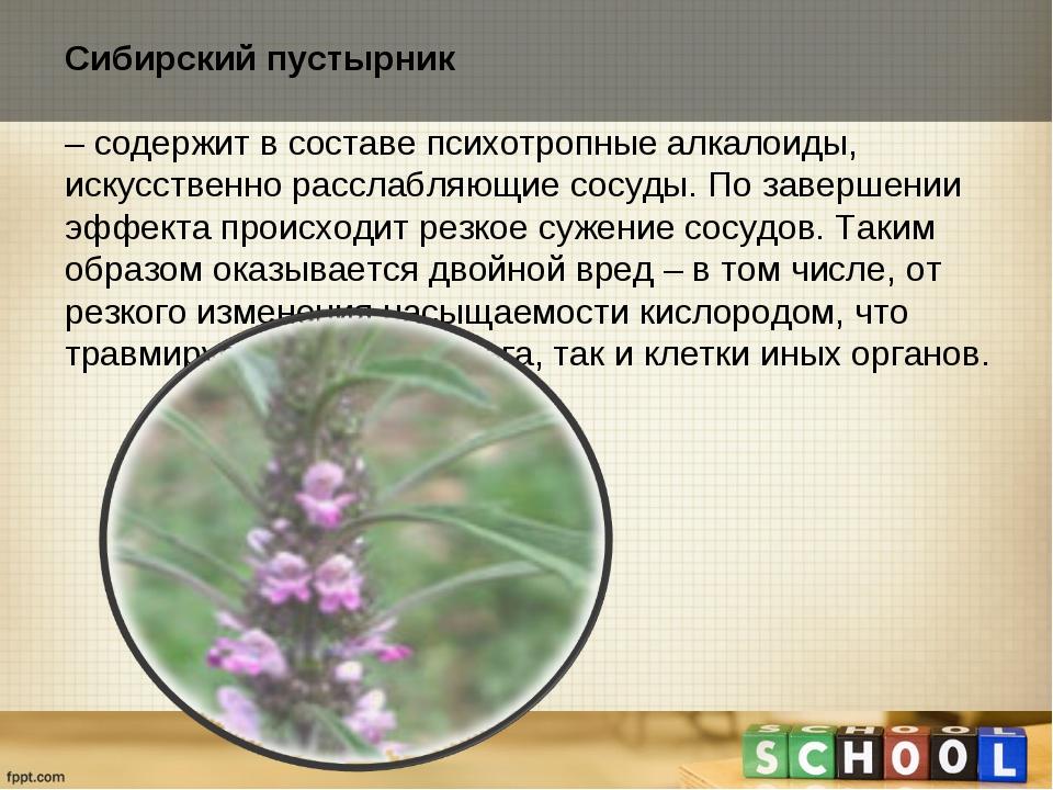 Сибирский пустырник – содержит в составе психотропные алкалоиды, искусственн...