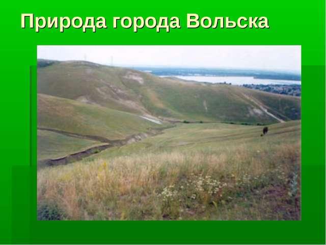 Природа города Вольска