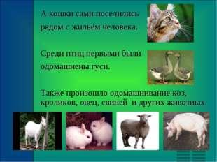 А кошки сами поселились рядом с жильём человека. Среди птиц первыми были одом