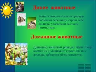 Дикие животные Живут самостоятельно в природе: добывают себе пищу, строят себ