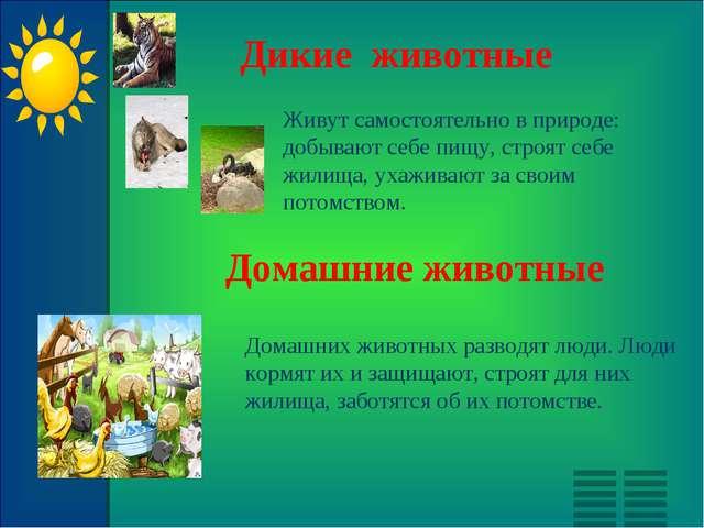 Дикие животные Живут самостоятельно в природе: добывают себе пищу, строят себ...