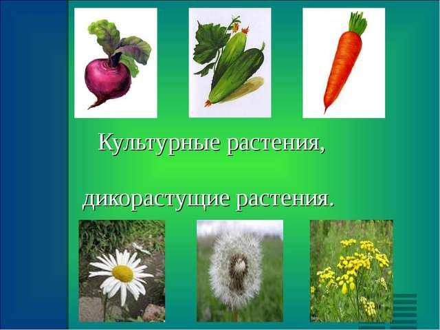 Культурные растения, дикорастущие растения.