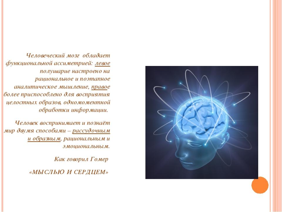 Человеческий мозг обладает функциональной ассиметрией: левое полушарие настр...