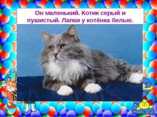 Он маленький. Котик серый и пушистый. Лапки у котёнка белые.