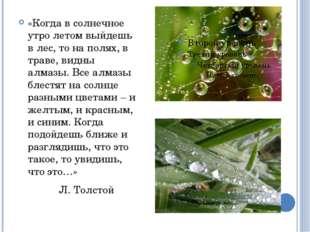 «Когда в солнечное утро летом выйдешь в лес, то на полях, в траве, видны алма
