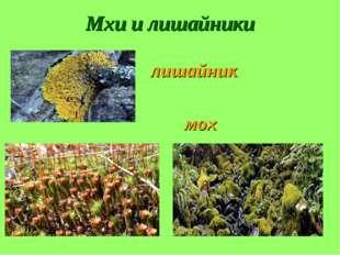 Мхи и лишайники лишайник мох